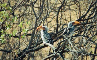 Tierwelt Zimbabwes II