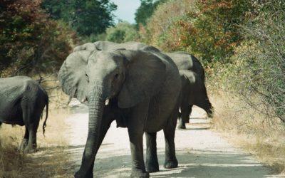 Tierwelt Zimbabwes I